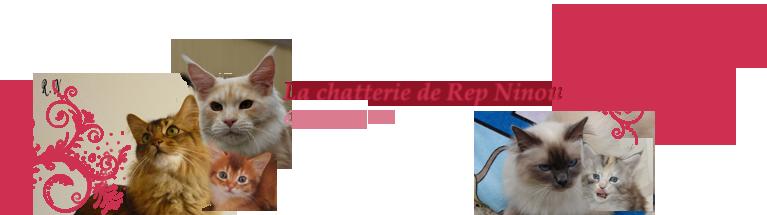 Chatterie de Rep Ninou